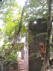Ruine Rodenstein, Zugang vom Wald