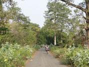 Petite route de la réserve