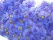 blaue Kornblumenblüten
