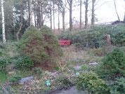 Katze auf roter Bank im Park