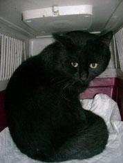 Blacky, 2 ans