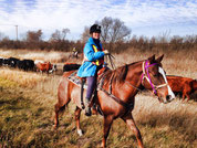 Kanada, Saskatchewan, Cattle Drive, Cowboys