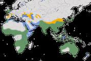 Karte zur Verbreitung des Seidenreihers (Egretta garzetta)