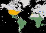 Karte zur Verbreitung des Kuhreihers (Bubulcus ibis)