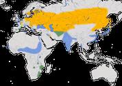 Karte zur Verbreitung der Rohrdommel (Botaurus stellaris)