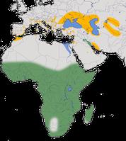 Karte zur Verbreitung des Rallenreihers (Ardeola ralloides)