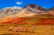 Andenpanorama Peru - Foto PromPeru -Archiv Paititi-Tours