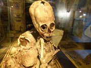 Alien Baby, Cusco Mumie, Museo Ritos Andino, Renato Davila Riquelme, Andahuaylas, Cusco, Peru, Paititi Tours and Adventures, Ancient Aliens Tour