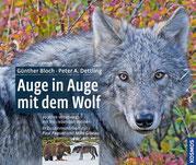 Auge in Auge mit dem Wolf - 20 Jahre unterwegs mit frei lebenden Wölfen