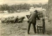 Realizando el boceto de la piara de cerdos