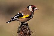 Camping Sites & Paysages  Les Saules à Cheverny - Loire Valley - A la découverte des oiseaux