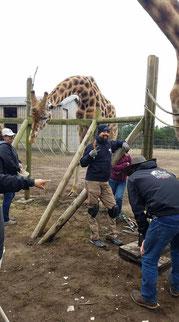 Foto: ELPO hoefsmid STEVE FOXWORTH verzorgt ook de voeten van dierentuindieren.
