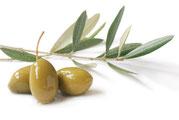 Spanische grüne Oliven, Bildquelle: © Anna Khomulo - Fotolia.com