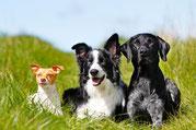 Gesunde Ernährung für Hunde und Katzen Reico Ernährungsberatung mit Liebe Füttern