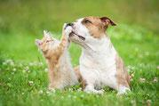Ernährungsberatung für Hunde & Katzen mit Liebe Füttern