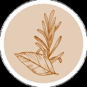 Brot; Brotteig; würzen; Gewürze; Kräuterbrot, Kräuter