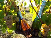 Bouteille de méthode traditionnelle dans les vignes