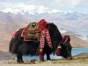 Sherpas in den Himalaya schicken