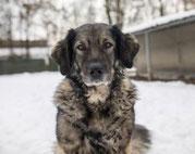 Tierheim Linz Hunde Tierheimnes Webseite