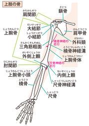 ヘバーデン結節、腱鞘炎、CM関節炎