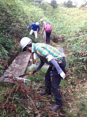 笹を刈り、沼地に掛かる渡り板を補修中。