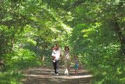 Randonnées forêt de mervent