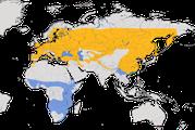 Karte zur Verbreitung des Baumfalkens (Falco subbuteo) weltweit