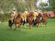 Peruanische Paso Pferde