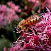 Insekten in meinem Garten