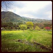 自然がとても美しいコスモス園