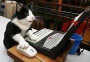 chat noir et blanc sur ordinateur qui surfe