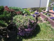 Schöner Garten, zugewuchtert, hässliche Pflanzringe, kreativ umgestalten