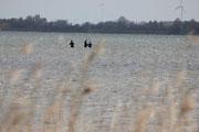 Kitekurs Ostsee