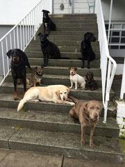 Hundebetreuung Reinbek