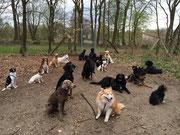 Hundebetreuung Bergedorf