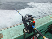 旬の釣り・料金案内