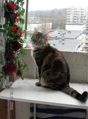 """Meine erste Katze, die """"Alte"""""""