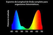 Puede verse que absorben los colores de los extremos de la luz blanca (hacia el azul 440nm-460nm y el rojo 630nm-660nm), pero no el verde, de lo que procede su color.