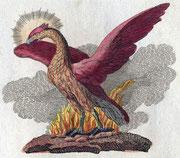 Fabelwesen Phoenix