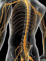整骨施術でホメオシタシスを促す