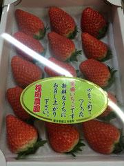 鯖江,福岡農園,苺