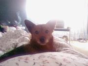Il mio piccolo Winny
