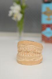 発音の説明に大活躍する歯の模型