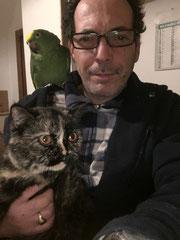 immagine gatto british shorthair in braccio