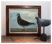 19thc naive portrait of a Guernsey pigeon