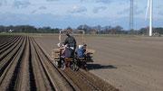 Kartoffelpflanzung von Hand