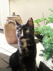 Mimine (1 an) - adoptée par sa FA