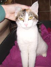 Mirabelle (7 mois) adopté le 21 janvier