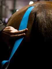 pferdetaping nach heinbokel,foto:hanno wiessmann