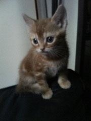 *子猫のニーナ